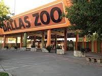 В зоопарке США лев загрыз львицу на глазах у посетителей