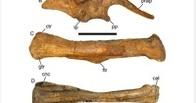 Американский школьник нашел кости древней рептилии