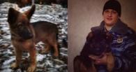 МВД подарит коллегам из Парижа щенка Добрыню, который заменит им погибшего Дизеля