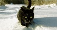 МЧС узнает о «черном снеге» из СМИ