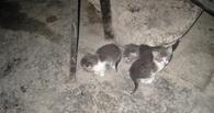 Котят, замурованных в подвале, будут спасать омские политики