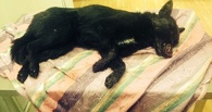 В Омске живодеры до смерти замучили бездомную собаку