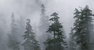 Синоптики обещают в Омске чрезвычайную пожароопасность, несмотря на дождь