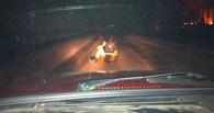 В Омске пьяный парень бросался под колеса машин