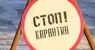 В двух деревнях Омской области из-за бешенства ввели карантин