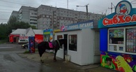 В Омске в киоск с горячим питанием заглянула лошадь