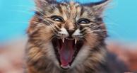 В Омской области обнаружили бешенство у домашних собаки и кошки