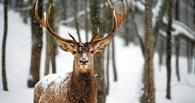Ища самку, в Омске олень сбежал из парка 30 лет ВЛКСМ