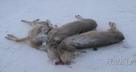 На жителя Омской области завели уголовное дело за убийство трех косуль - ФОТО