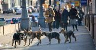 Защитники животных не смогли остановить в Омске отлов стерилизованных собак с «клипсами»