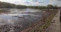 Вырубка деревьев на «Зеленом острове» Омска идет в рамках благоустройства парка