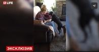 Пес Кирюша из омского приюта «Друг» учит в Канаде английский язык