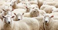 Житель омской деревни чуть не лишился овец за то, что затопил соседку снизу