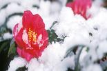 Начало зимы омичи встретят со снегом