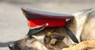 На железнодорожном вокзале в Омске служебная овчарка нашла наркотики