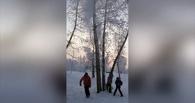 Американцам понравилось видео о том, как житель Омска пнул дерево и завалил снегом детей