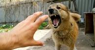 Губернатор Назаров вел карантин из-за бешенной собаки в одном из районов Омска