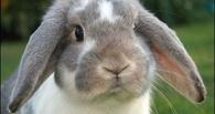 Из огня в Омске пожарные спасли 10 кроликов
