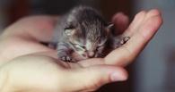 В Омске в подвале многоэтажки заживо замуровали кошек с котятами